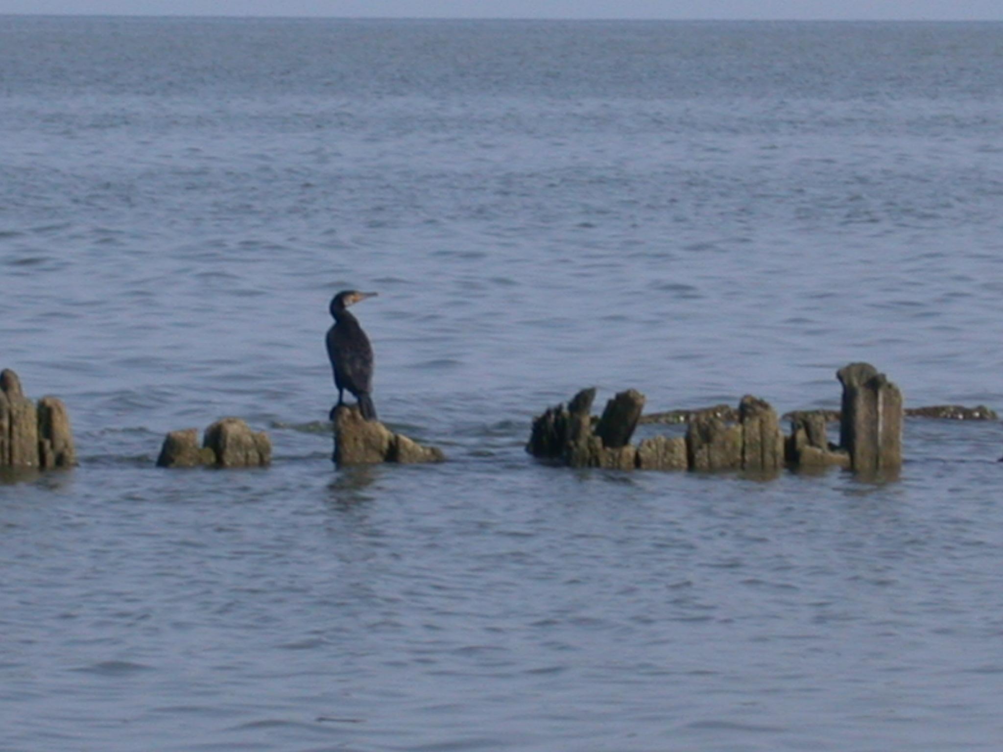 рыбалка и нетолько